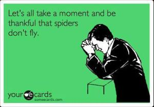 thankful spiders